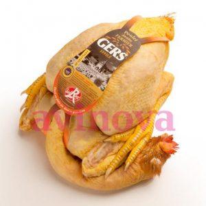 Pollo de payés Gers