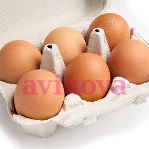 Huevos y caracoles